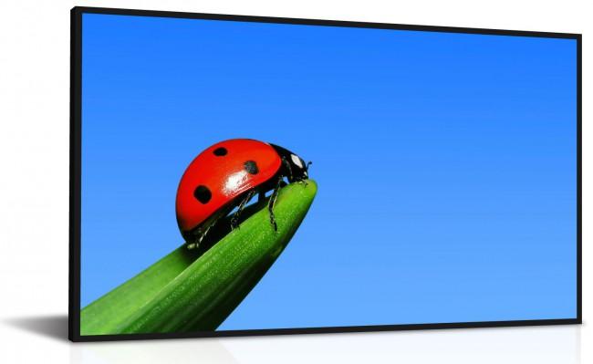 Professional-LCD-SlimBezel1-650x399